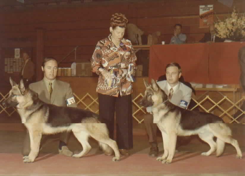 CH. ALKO VAN AL HAUS & HIS SON, ROBSHIRES KINO - Winning Best of Breed & Winners dog.